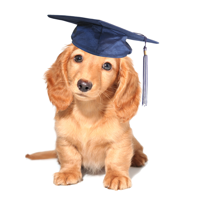 Canine Behavioral<br /> Assessment &amp; Enrichment