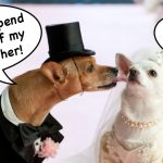 Meet and Greets: Don't Force Your Dog Into An Arranged Marriage