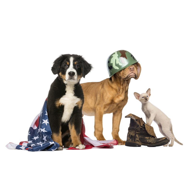 Pets For Vets –<br /> No Buddy Left Behind