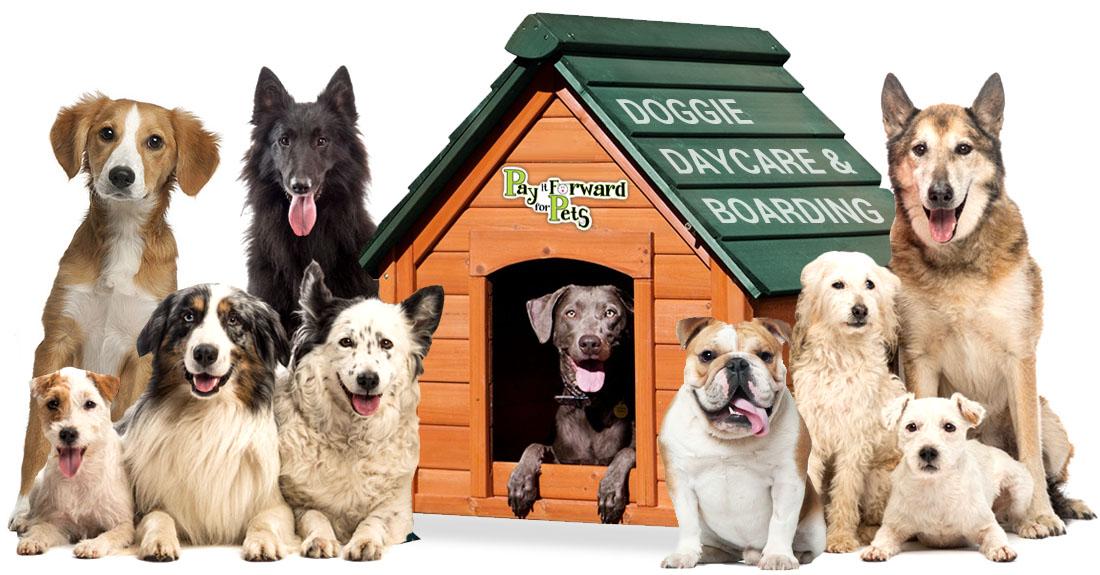 piffp_doggie-daycare-boarding